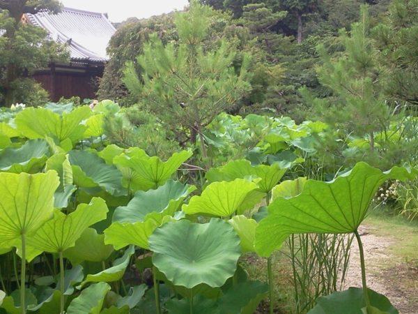 法金剛院庭園 / Hokongo-in Temple Garden, Kyoto