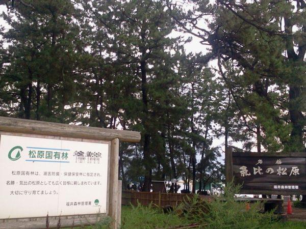 気比松原 / Kehi-no-Matsubara Beach, Tsuruga, Fukui