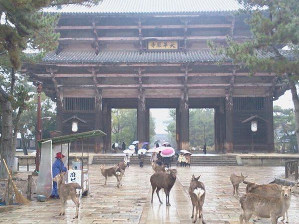 奈良公園 / Nara Park, Nara