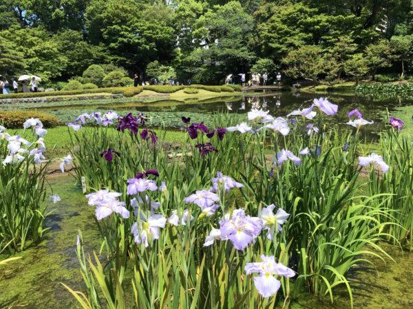 皇居東御苑 二の丸庭園