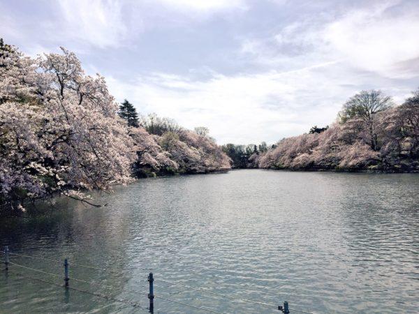 井の頭恩賜公園 / Inokashira Park, Mitaka, Tokyo
