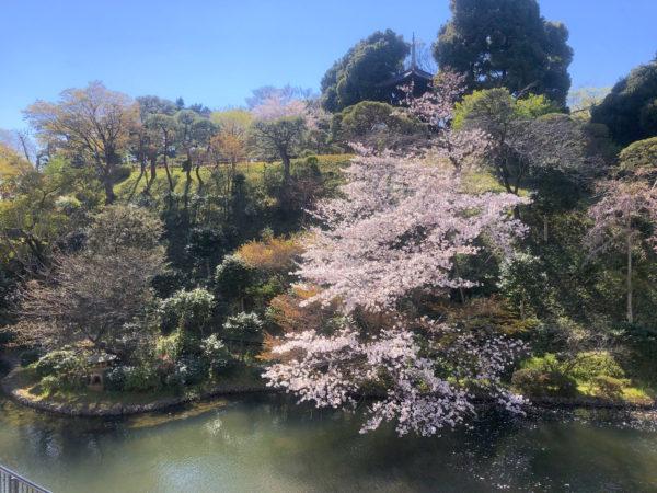 ホテル椿山荘庭園