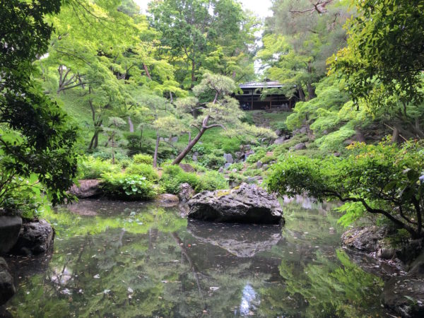殿ヶ谷戸庭園 / Tonogayato Garden, Kokubunji, Tokyo
