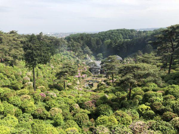塩船観音寺つつじ園 / Shiofune Kannon-ji Temple Azeleas Garden, Ome, Tokyo