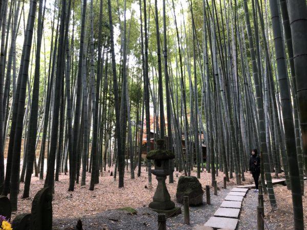 報国寺庭園 竹の庭