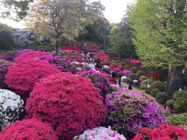 根津神社つつじ苑 / Nezu-jinja Shrine Garden, Tokyo