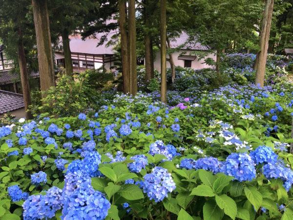 深妙寺庭園