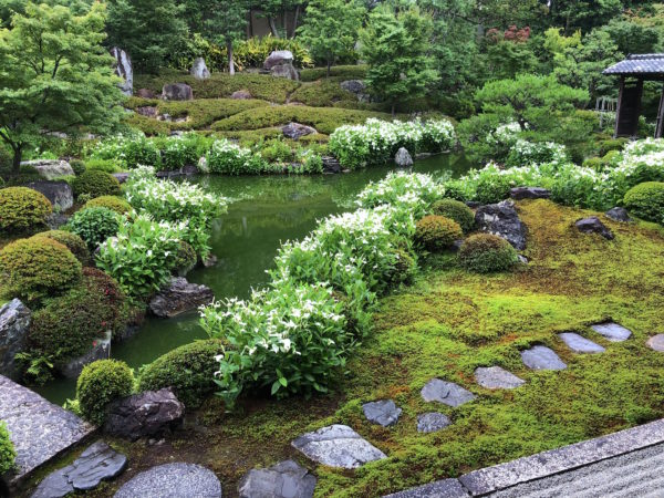"両足院庭園""半夏生の庭"""