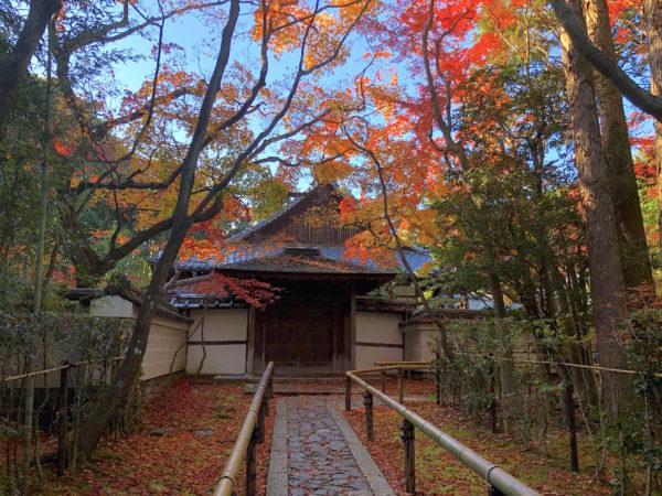 大徳寺 高桐院庭園