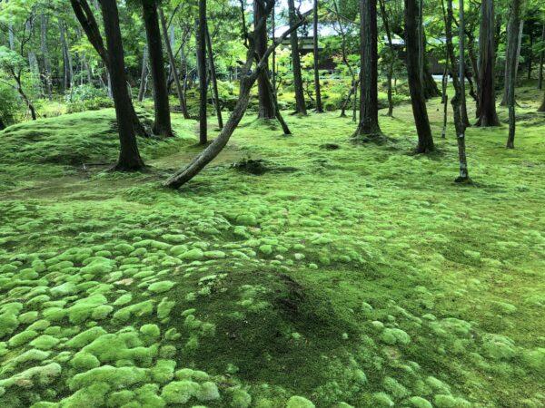 西芳寺庭園(苔寺)